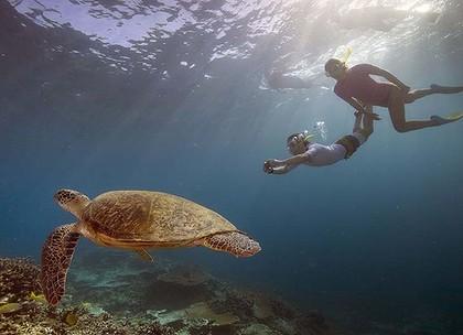 snorkeling e immersioni koh chang - testuggine di mare