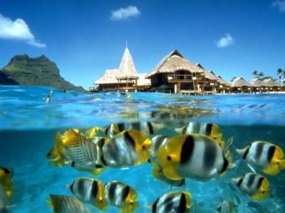 Pesci ed immersioni - Isola di Redang - Malesia