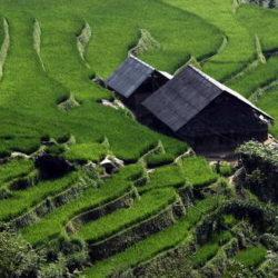 vietnam_risaie-a-terrazza_innviaggi
