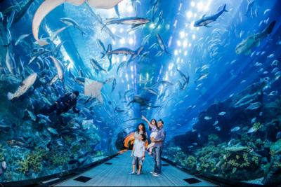 natura a singapore sea aquarium