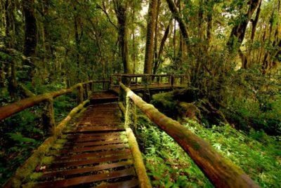 escursioni nel parco nazionale di doi inthanon